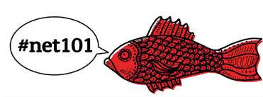 fish norm4