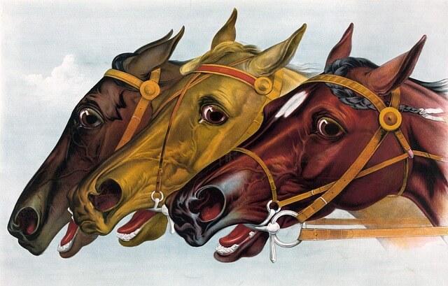 horse-316959_640 (1)